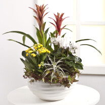 Arrangement of Plants